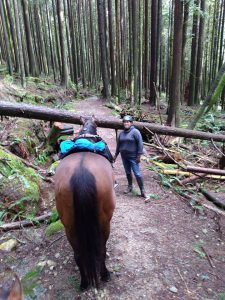 Horse and person provide perspective in photo of large fallen tree blocking trail.